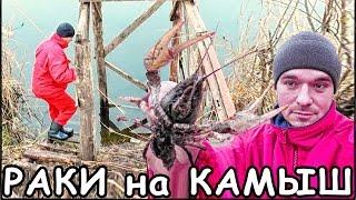 ЛОВЛЯ РАКОВ на КАМЫШ - ПРОЩЕ НЕКУДА / РЫБАЛКА и УРОК ВЫЖИВАНИЯ # 1(Очень простой и хороший способ рыбалки на раков - это ловля на обычный камыш! Никто не знает как с ним пошути..., 2016-03-15T14:02:09.000Z)