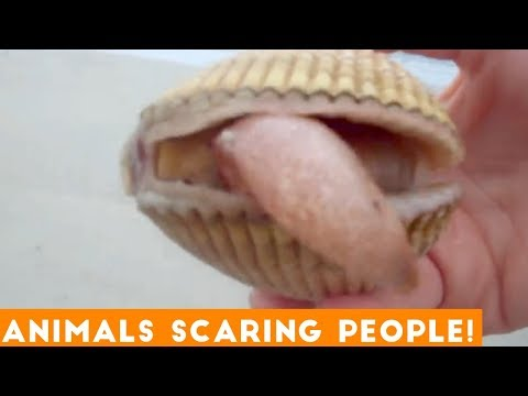Funniest Animals Scaring People Reactions of 2018 Compilation | Funny Pet Videos
