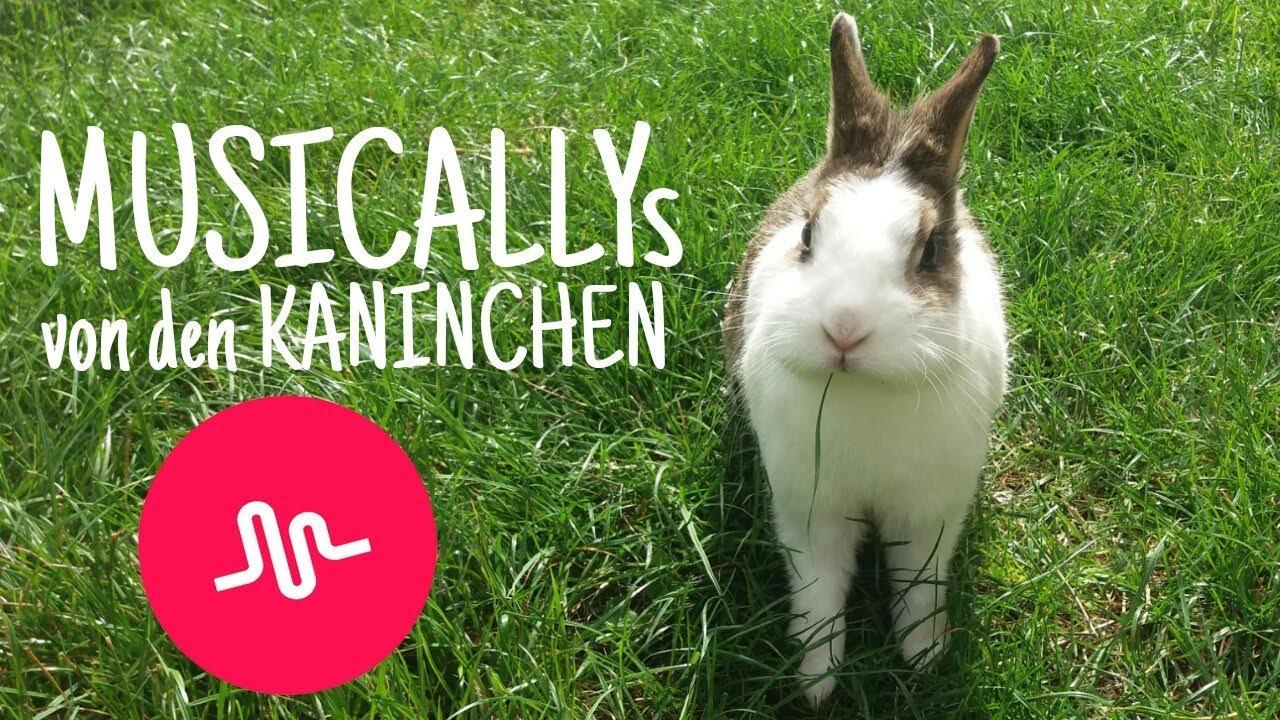 Musicallys Tik Tok von den KANINCHEN 8 🎵🐇   Kaninchenstar