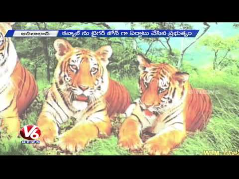 Special Story on Kawal Wildlife Sanctuary | Growth in Wild Life | Tiger Reserve | Adilabad | V6 News