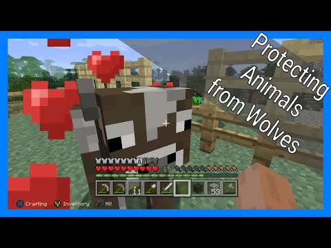 Minecraft - Protecting My Sheep And Cows From Wolves