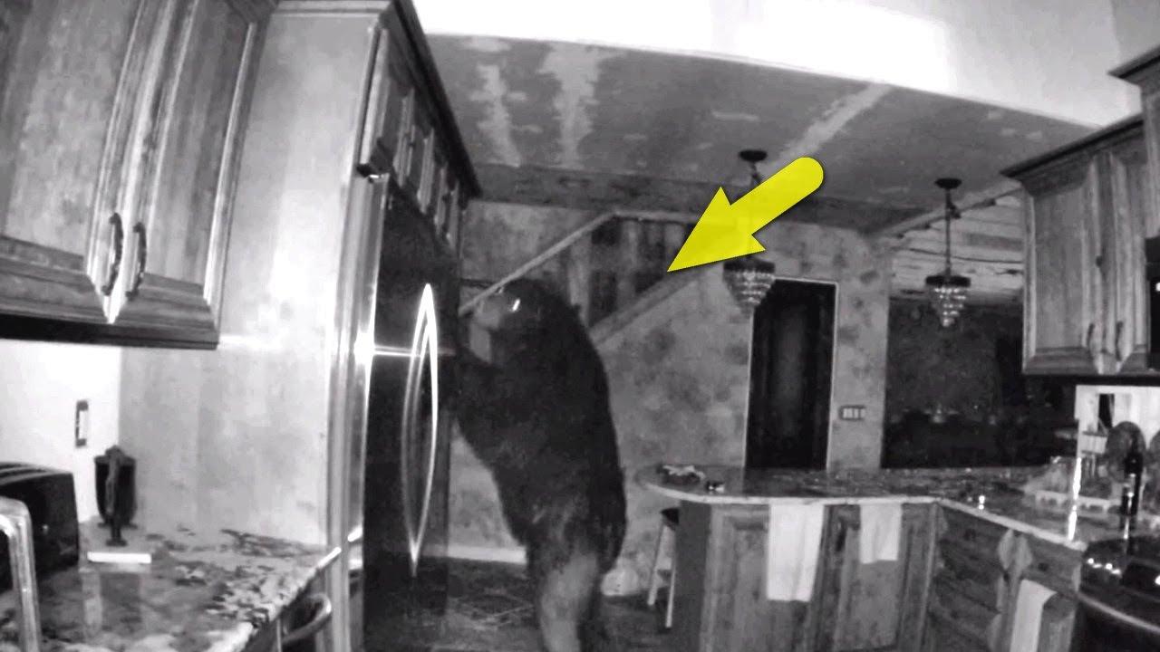 15 случаев, когда дикие медведи забрались в дом к людям