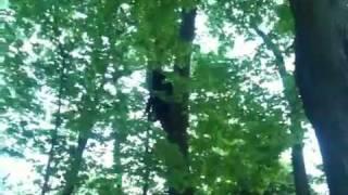 Black bear in Tree Bristol ct