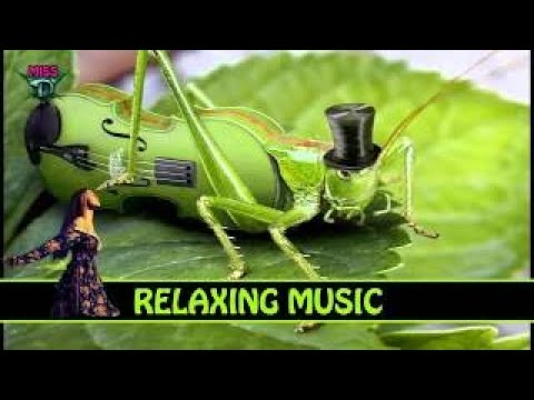 3 HOURS Relaxing Sound Background Music JAZZ BLUES Keep It Tight
