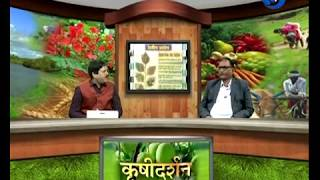 Krishidarshan - 21 June 2018 - शेंदरी बोंडअळींचे एकात्मिक किड व्यवस्थापन