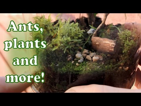 Making a terrarium! Self sustaining ecosystem in a jar!