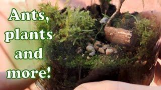 Making a terrarium! Self sustaining ecosystem in a jar!