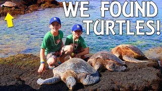 We Found Sea Turtles!