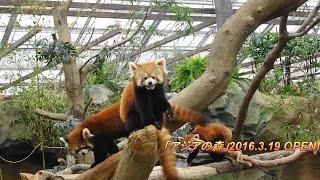 神戸どうぶつ王国に2016.3.19新エリア「アジアの森」がオープンしました...