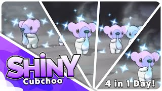 4 Live Shiny Cubchoo Reactions! All in the same day!