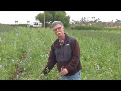 San Diego Flowers: Mellano Farms