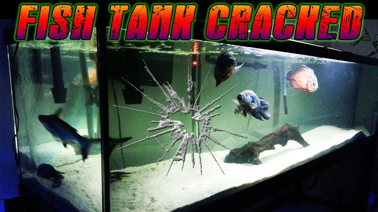 135 Gallon Fish Tank Cracked  YouTube