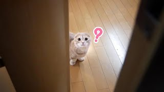 寂しがり屋な短足猫をおいて外出しようとした結果がこちら