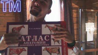 ТМ - Атлас анатомии домашних животных