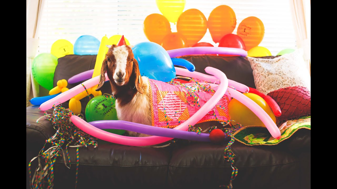 Image result for birthday goat