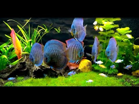 Gorgeous planted Discus Tank owned by Martin Krysa Hanák