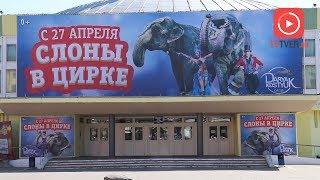 """""""Шоу слонов"""" с программой """"Калейдоскоп фантазий"""" в Тверском цирке"""
