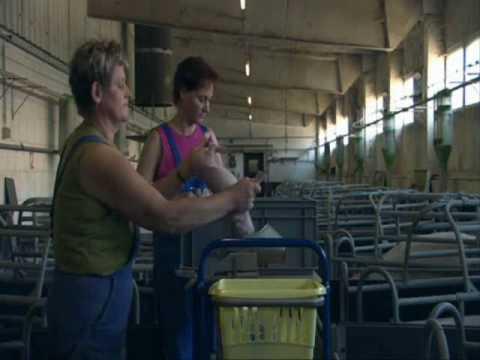 Unser Täglich Brot - Factory Farming