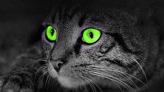كيف ترى القطط العالم من حولها وهل ترى فى الظلام ؟