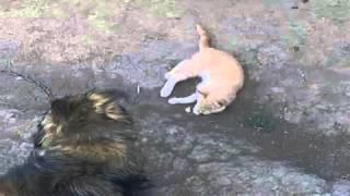 Собака насилует кота под музыку я тебя бум-бум