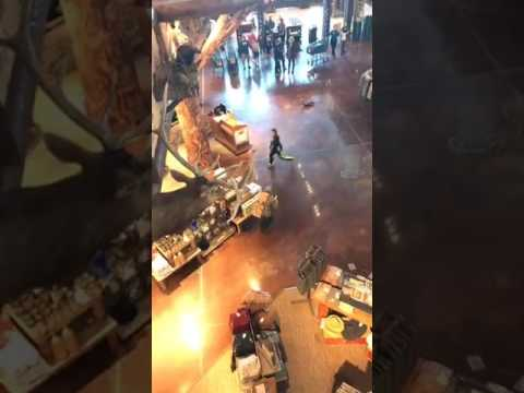 Turkey Hunting In Bass Pro Shops (Portage Indiana)