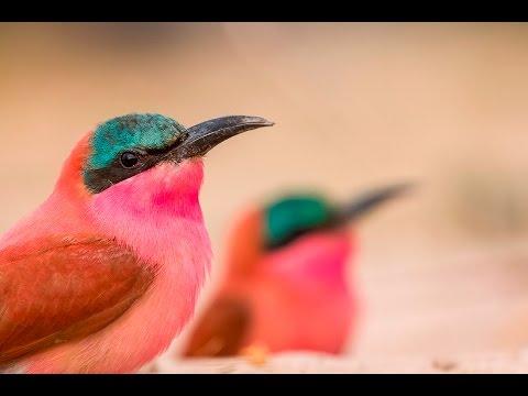 Chobe & Kalizo Safari Overview by Andrew Aveley | The Photographer Vlog EP 9