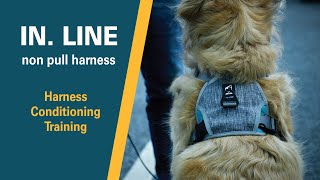 IN . LINE no pull harness | how to condition a dog to put their head into harness | Best Dog