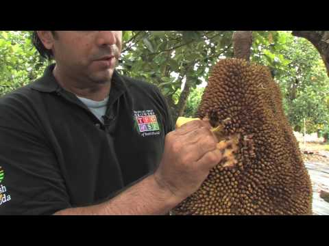 Jakfruit with the Tropical Fruit Growers of South Florida