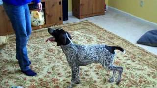 Gsp Chasing Feather Toy