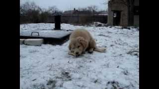 Приюти щенка - Кривой Рог