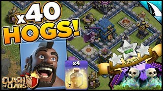 40 Hog Riders Destroying Legend League! Crush With The Hogs | Clash of Clans