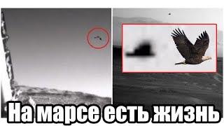 На Марсе Обнаружена Живая Птица [Марс Обитаем]