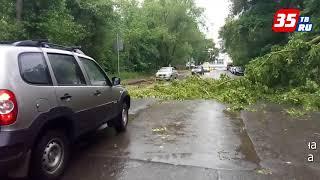 В Вологде упавшее дерево перегородило дорогу