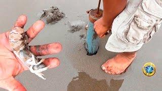 Cómo Sacar Napes o Maruchas【Ghost Shrimp】#Cebodepesca