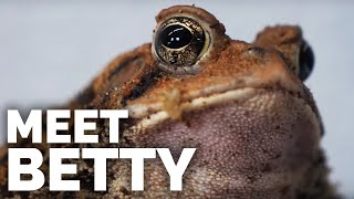 meet-betty-my-fat-charismatic-american-toad