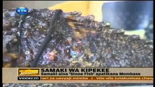 News Samaki hatari mwenye mishale apatikana Mombasa