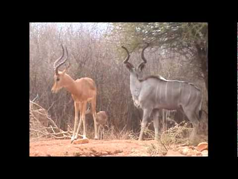 SOUTH AFRICA: Recent Experience Hunting With Motshwere ...