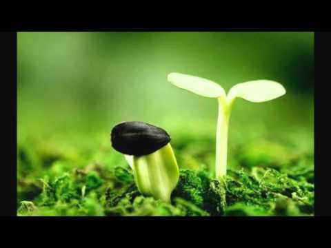 Niềm hy vọng - có lời.wmv