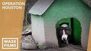 Rescue Of Injured Dog In 6th Most Dangerous Place In Us By South Side Street Dogs: Operation Houston