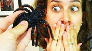 GIANT SPIDER IN MY BED!!! (4.1.10 - Day 336)