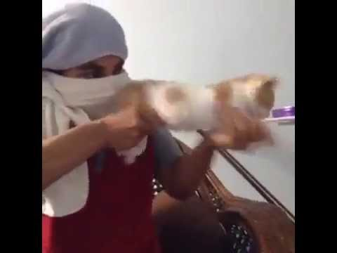 A Cat Used As Rifle | funny cat