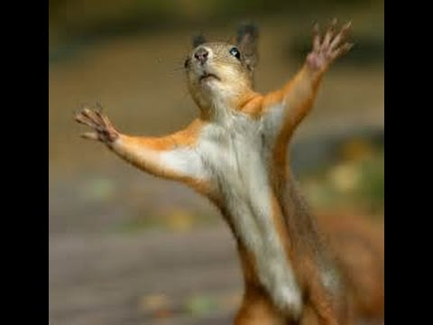 funny talking squirrel