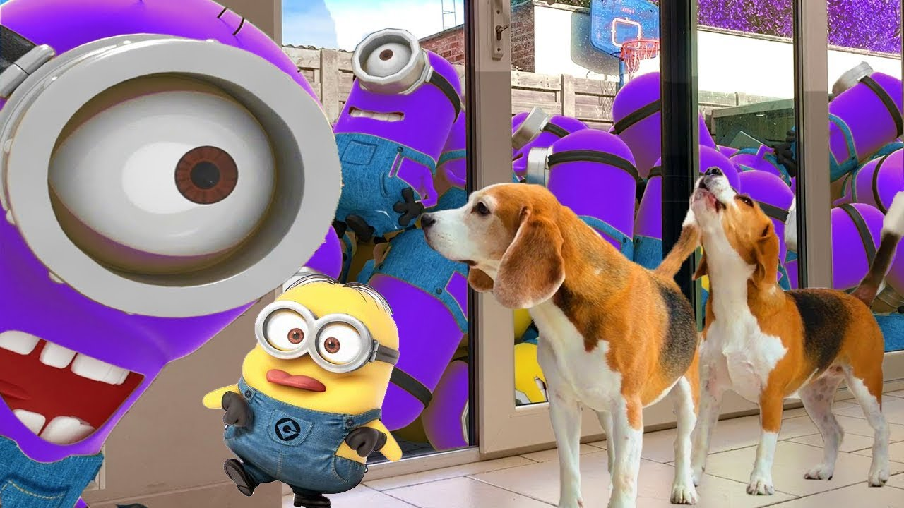 Minions In Real Life Pranking Dogs !