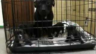 子犬が生まれていますよ http://www.woof.jp/sbt.html.