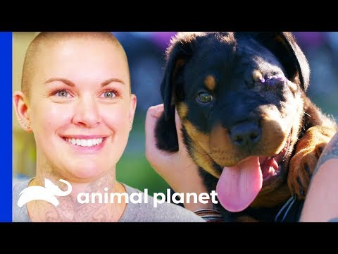 Chunky Rottweiler Pup Gets Much Needed Eye Surgery | Amanda To The Rescue