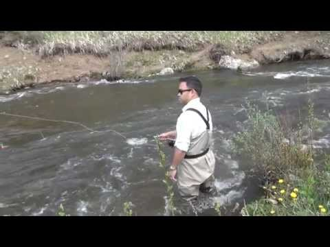 Gila trout fly fishing doovi for Pecos new mexico fishing