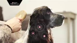 Корма Pro Plan (Про План) для чувствительных собак
