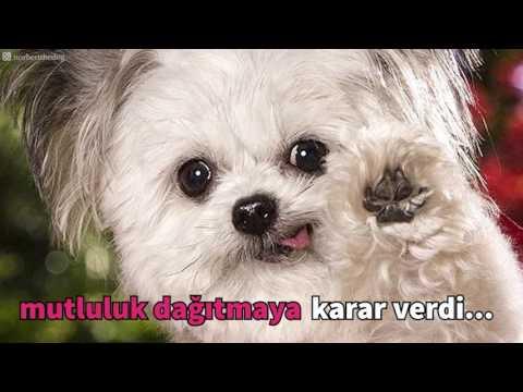 Dünyanın En Tatlı Terapi Köpeği