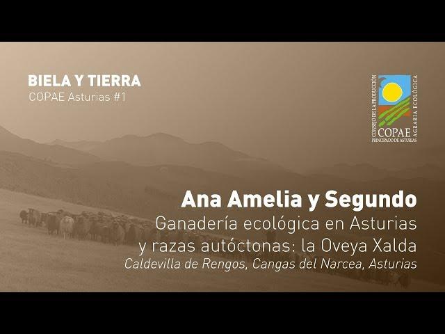Ganadería ecológica en Asturias y razas autóctonas: la Oveya Xalda