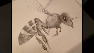 Riso Art time-lapse drawing of a Honey Bee